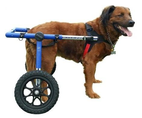 Walkin' Wheels For Large Dogs 70-180 LBS