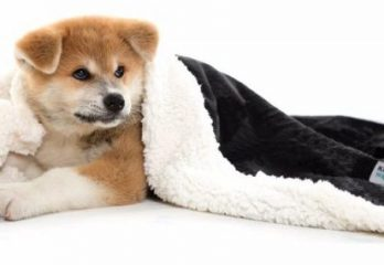Top 10 Best Dog Blankets in 2017 – A Review From Pet Expert