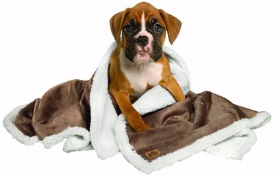 Top 10 Best Dog Blankets In 2019 Reviews From An