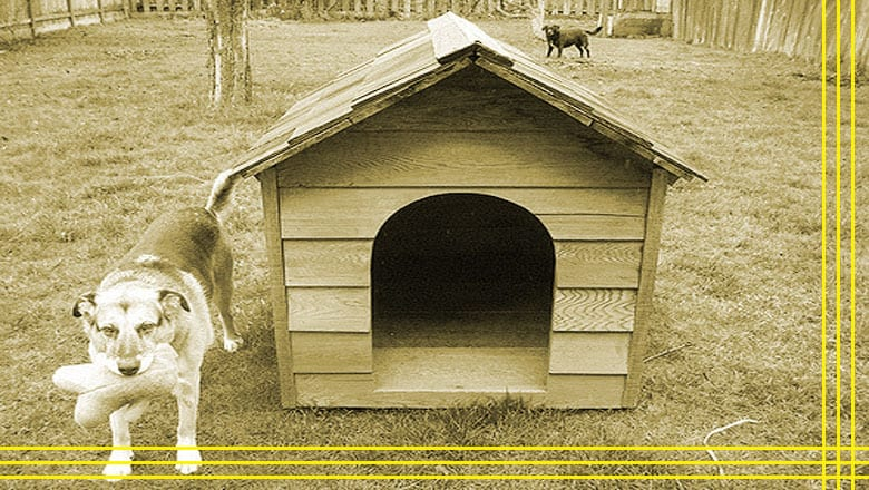 Top 10 Best Dog Houses...