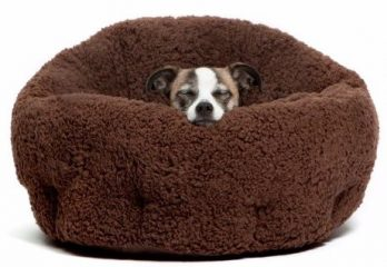 Top 8 Best Dog Beds in 2017 – A Complete Review From Pet Expert