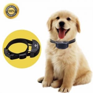 10 - My Love My Pet Dog Collar
