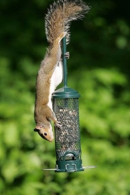 4 - Brome 1055 Squirrel Buster Mini 4.4x4.4x21 Wild Bird Feeder