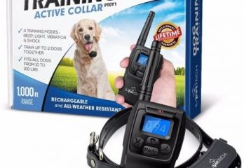 Top 10 Best Dog Collars in 2017 Review