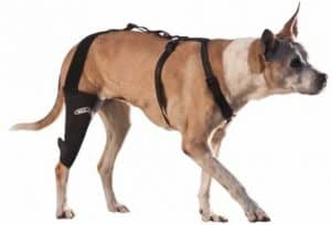 5 - Canine Knee Brace 3.0 mm neoprene support sleeve