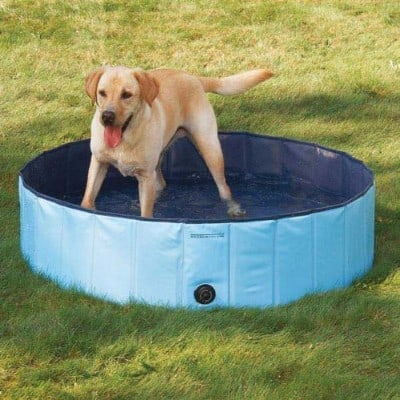 5 - Cool Pup Dog Pool