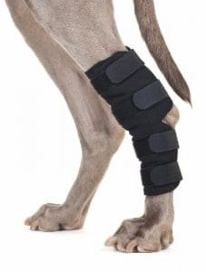 6 - Back on Track Therapeutic Dog Rear Leg/Hock Brace