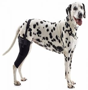 8 - Kruuse Rehab Knee Protector For Dogs