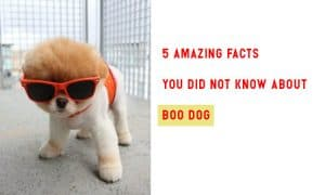 5 Amazing Facts You Did Not Know About Boo Dog