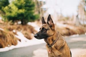 Pets Can Guarantee Security