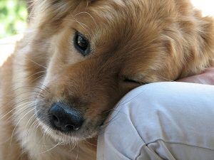 Pets are Faithful Listeners