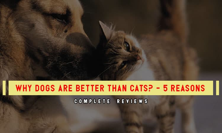 Why Dogs Are Better Than Cats? - 5 Reasons