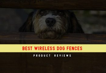 Control Your Dog With These 8 Best Wireless Dog Fences in 2018