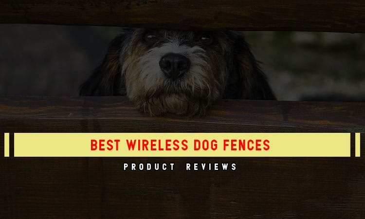 Control Your Dog With These 8 Best Wireless Dog Fences in 2021