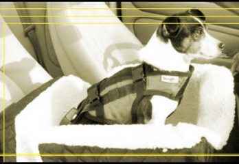 Top 10 Best Dog Car Seats in 2018 Reviews – Buyer's Guides