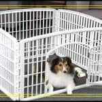 Top 10 Best Dog Playpens in 2019 Reviews