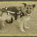 Top 10 Best Dog Wheelchairs in 2018 — Reviews & Buyer's Guides