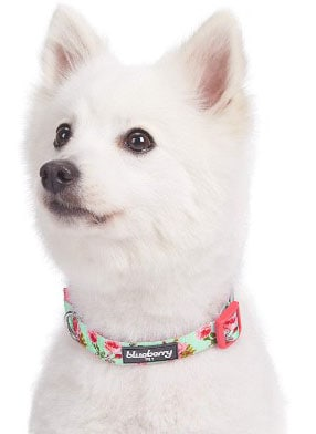 Blueberry Pet Spring Scent Floral Collection - Regular, Personalized Collars and Seatbelts for Dogs