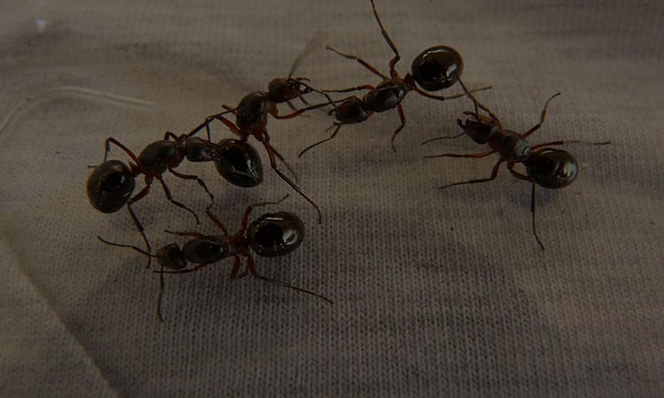 Top 10 Best Ant Killers In 2020 Review Buying Guides
