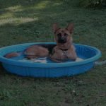 Top 10 Best Dog Pools in 2020 Reviews