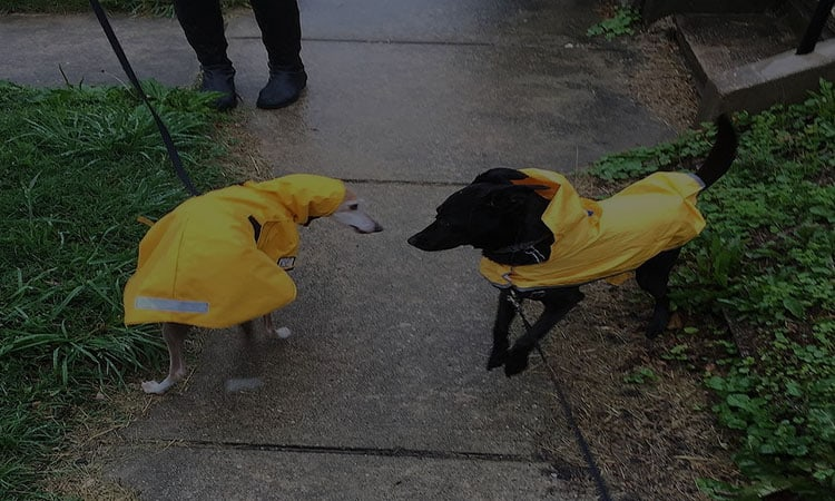 Best Dog Raincoats