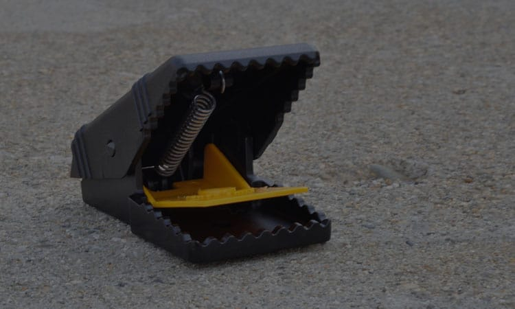 Best Mouse Traps In 2021 Review – Top 10 Products